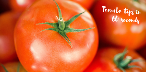 beginner-tomato-tips-in-60-seconds-header