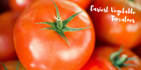 easiest-vegetables-tomatoes-header