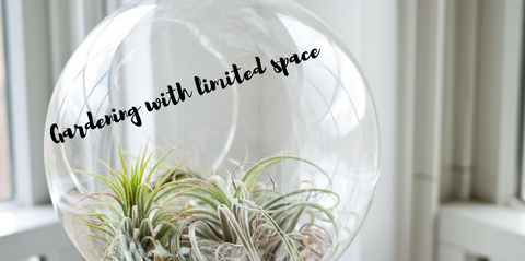 how-to-grow-a-garden-with-very-limited-space-header