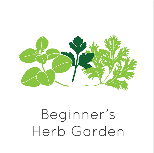 Beginner's Herb Garden Seed Bundle - Large