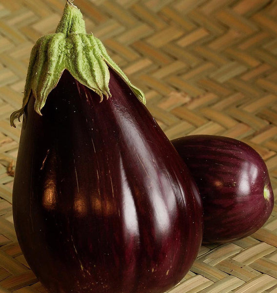 Black Beauty Organic Eggplant