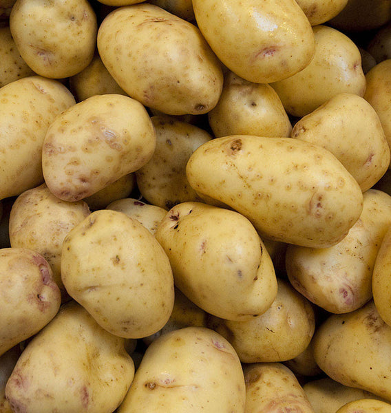 Yukon Gold Organic Potatoes
