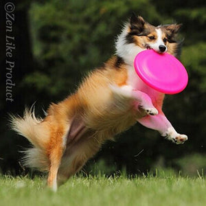 """FREE""  Flying Disc ( Just Pay Shipping )"