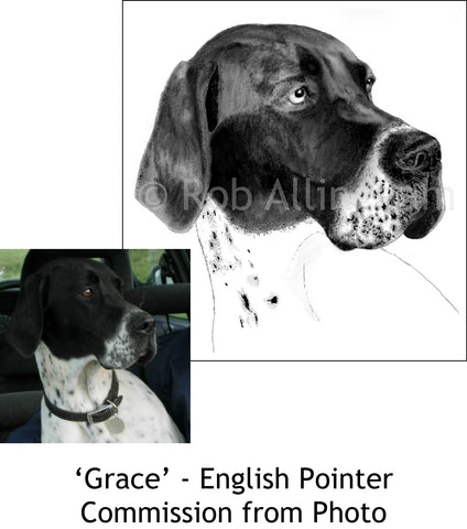 English Pointer Commission