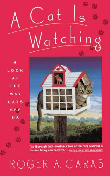 Cat Is Watching : A Look at the Way Cats See Us