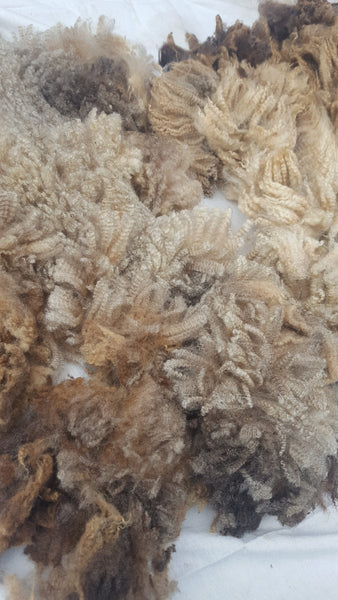Middle Brook Fiberworks Shetland fleece