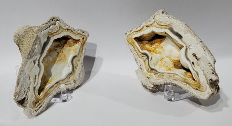 Agatized Coral Pair