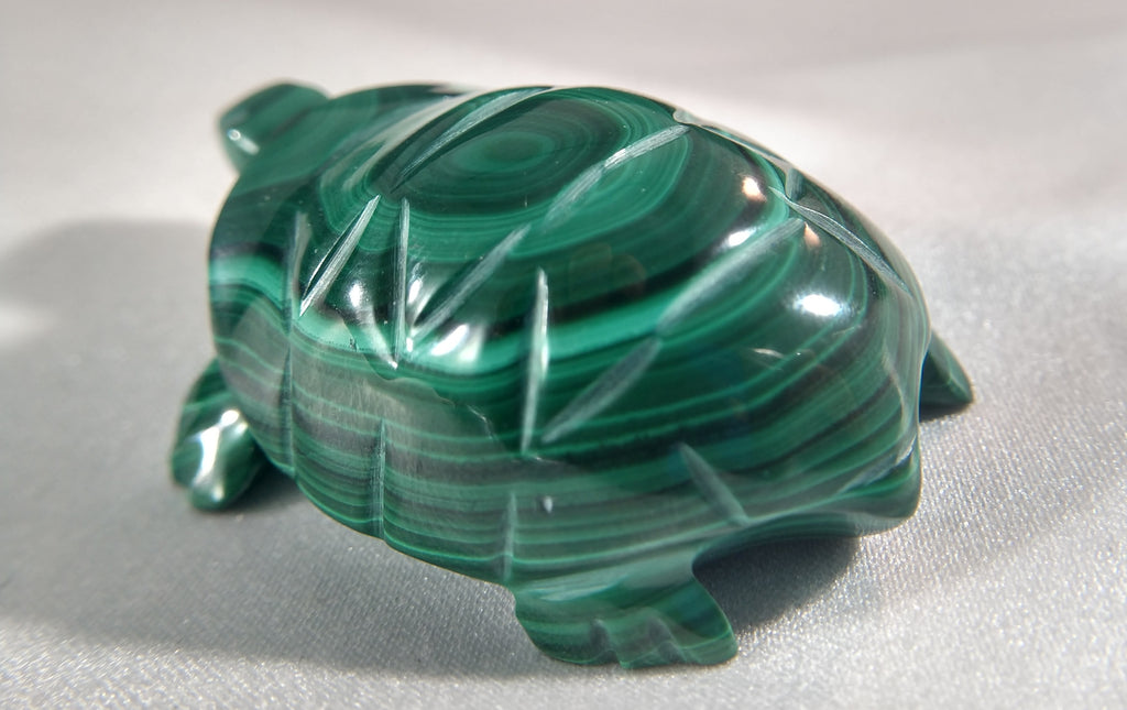 Malachite Turtle