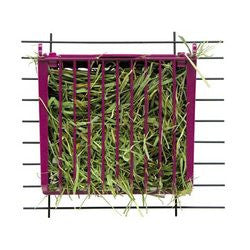Hay Buffet with Snap & Lock Lid