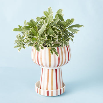 Striped Planter and Dish - Large