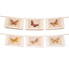 Dale Hill's Butterfly Collection Stationery Set of 6 - Oranges - lovingkindness - 1