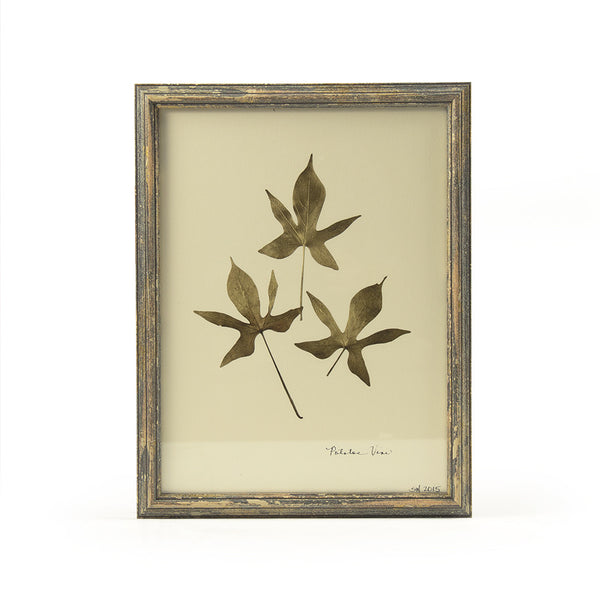 Botanical Gold - Potato Vine Wall Art Print