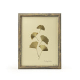 Botanical Gold - Ginkgo Biloba Wall Art Print
