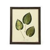 Botanical Hostas Funkia Wall Art Print