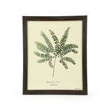 Botanical Maidenhair Fern Adiantum Wall Art Print