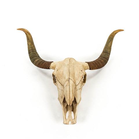 Bull Skull and Horns Artificial Wall Art / Sculpture