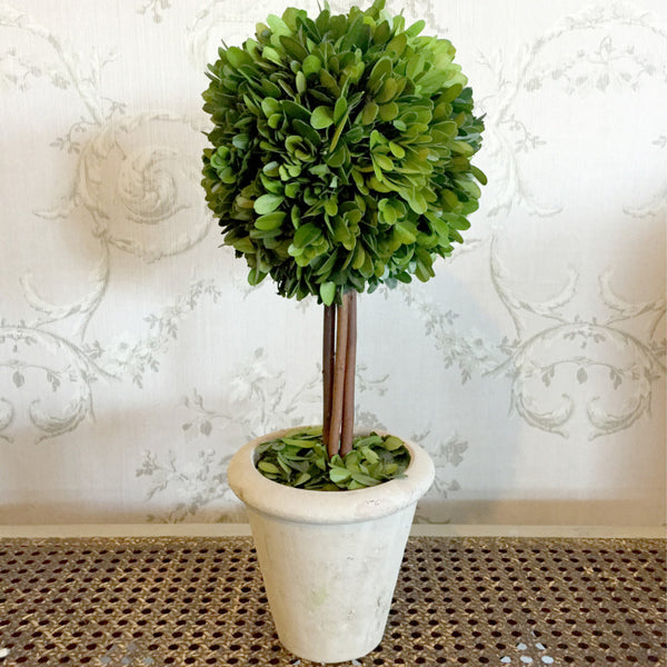 Real Preserved Boxwood Single Ball Topiary 16""