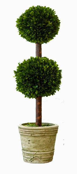 Real Preserved Boxwood Double Ball Topiary 30""