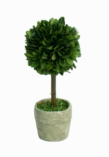 Real Preserved Boxwood Mini Single Ball Topiary in Pot 6""