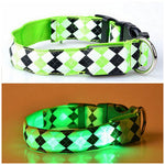 LED Argyle Collar for Dogs