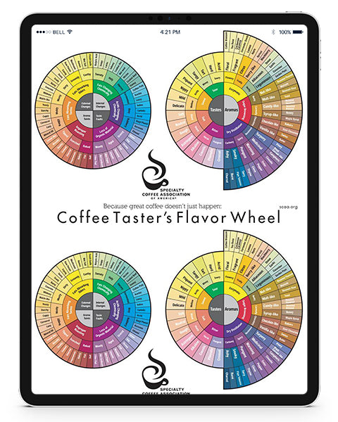 The Coffee Taster's Flavor Wheel (1995) - English (Digital Version)