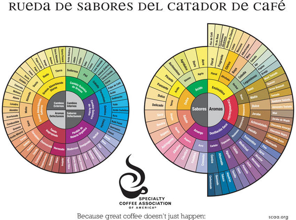 The Coffee Taster's Flavor Wheel (1995) - Spanish (Digital Version)