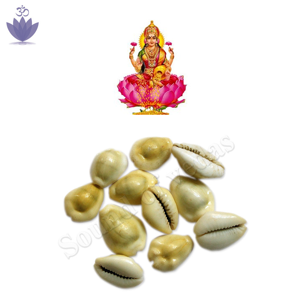 Yellow Cowry for Puja - SoundofVedas - 2