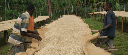Ethiopia Sourcing Trip. Part 1 of 3.