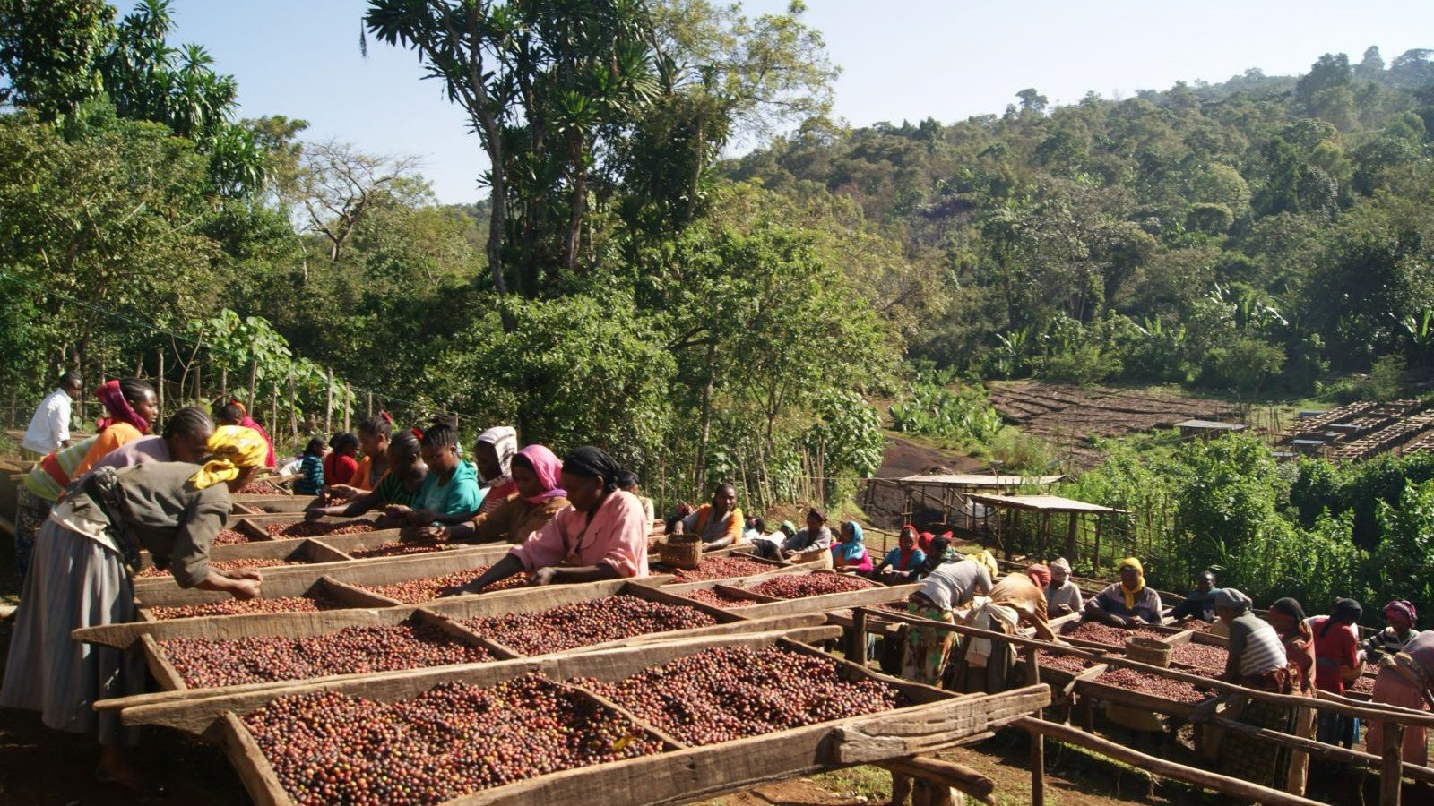 origin-coffee-journal-ethiopia-coffee