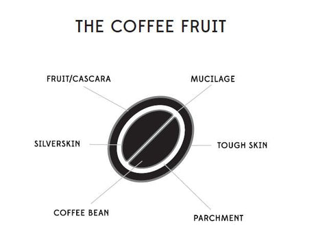 The coffee fruit teminology