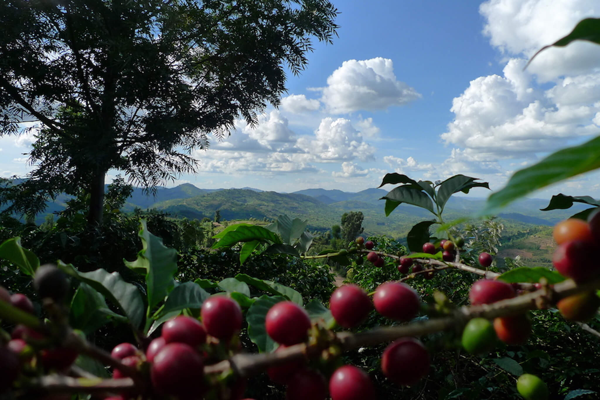 origin-coffee-caravela-sustainability