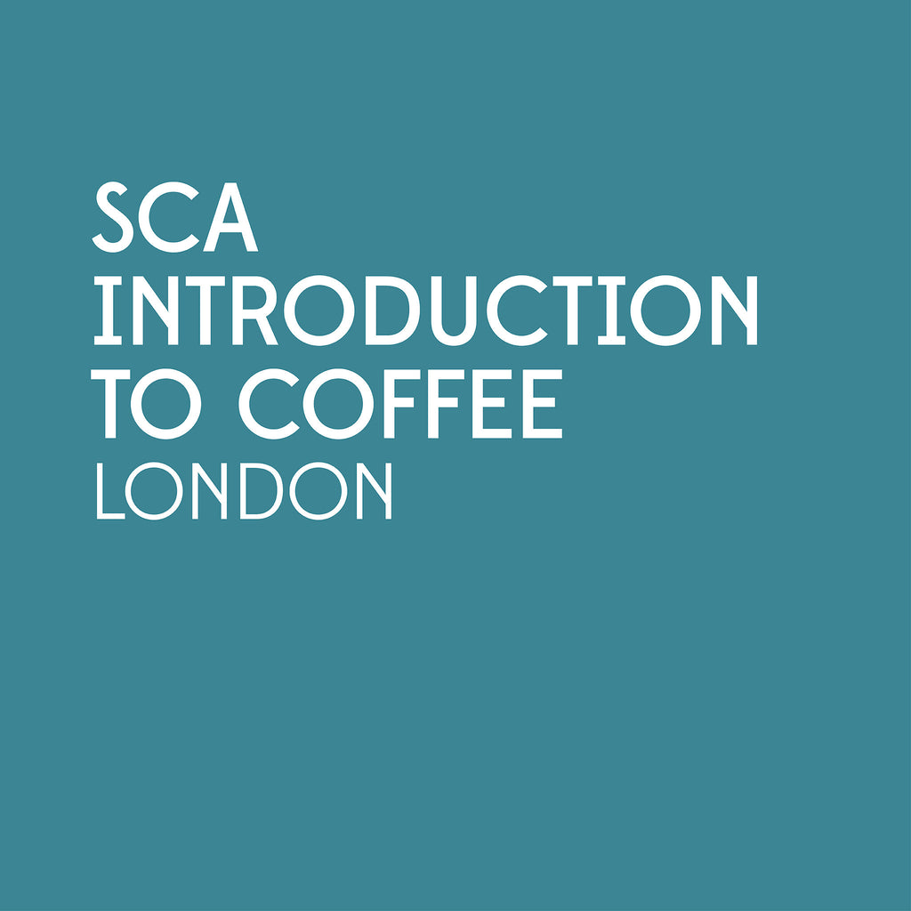 SCA Introduction to Coffee | London