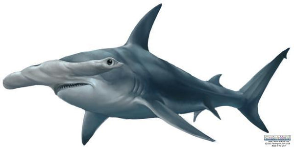 Excellent Hammerhead Shark Wall Mural ~Peel & Stick for Easy Application ZF28