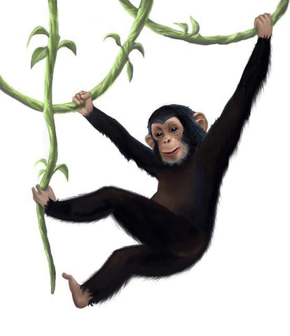 Monkey Mural Decal - Create-A-Mural