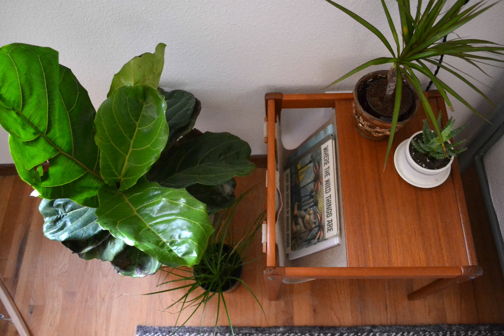 Washington Home Tour with Summer Wick. Midcentury modern furniture, house plants, fiddle fig