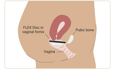 The Flex Company What the Hell Is the Vaginal Fornix?