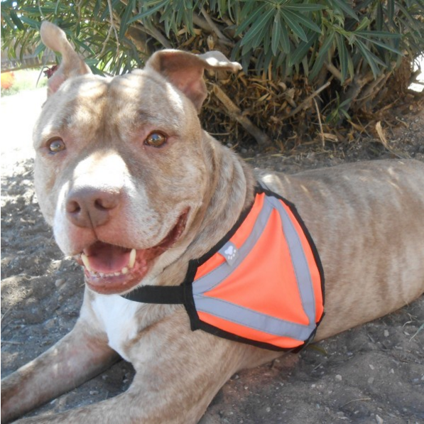 Reflective Safety Vest - Large Size Breeds