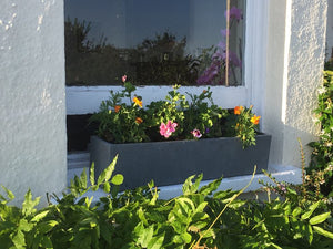 Top five tips for planting your window box