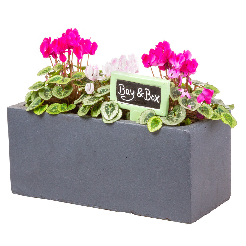 Video: Planting your window box