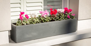 What type of compost should I use in my window box?