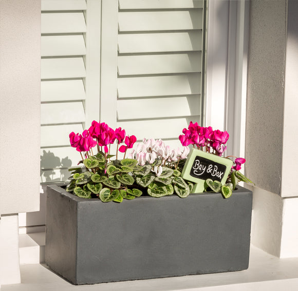 Window Box - Bay and Box