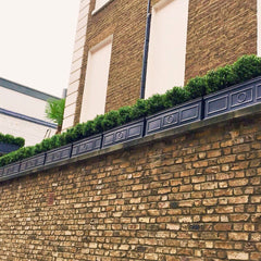 Roof terrace with Bay and Box Buxus Balls and window boxes
