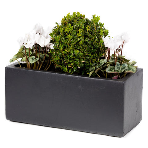 Planted small window box - Bay and Box