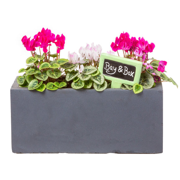 Small window box in Hampstead Lead Grey planted with pink flowers - Bay and Box