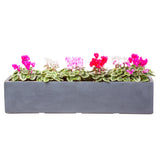 Large window box in Hampstead Lead Grey, planted with pink flowers - Bay and Box