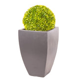 Hotel Collection Vase in Parisian Grey planted with Buxus Ball - Bay and Box