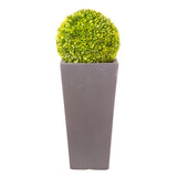 Society Vase in Hampstead Lead Grey planted with Buxus Ball - Bay and Box