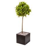 Large Cubist Planter - Amalfi Black