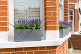 artificial lavender window box