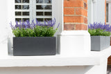 Hampstead Lead - Window Boxes